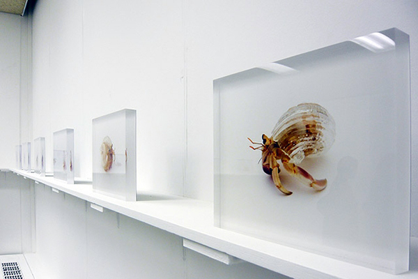 Installation view at Ai Kowada Gallery